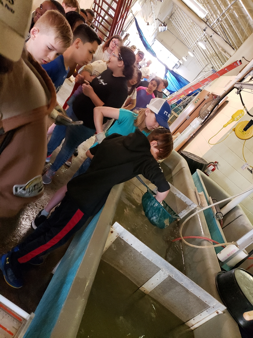 Students sorting fish in the hatchery