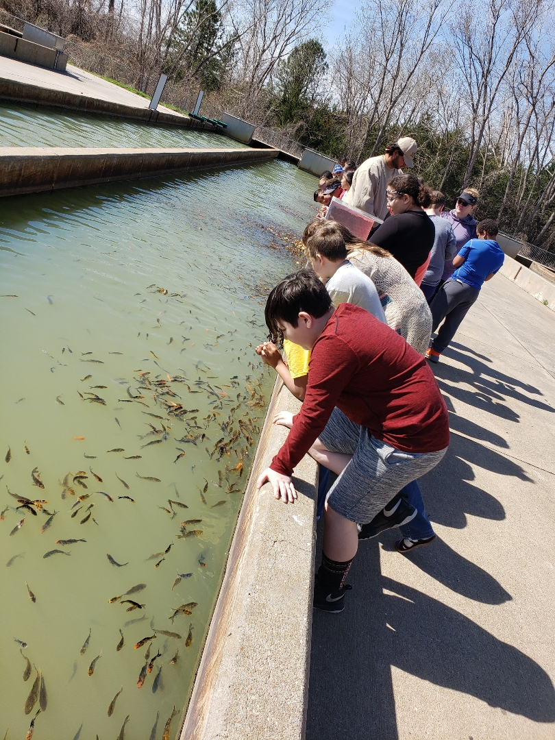 Students looking at small fish in out door runs